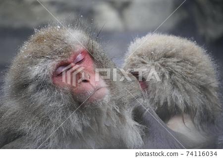 從Jigokudani溫泉的日本猴子 74116034