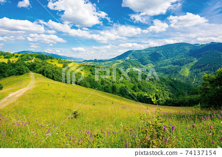 road through pasture on the hill in summer. beautiful rural landscape of carpathian mountains on a sunny day. wonderful summer weather with fluffy clouds on the sky 74137154