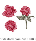 Valentine Rose Element hand paint Watercolour  isolated on white background 74137883
