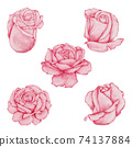 Valentine Rose Element hand paint Watercolour  isolated on white background 74137884