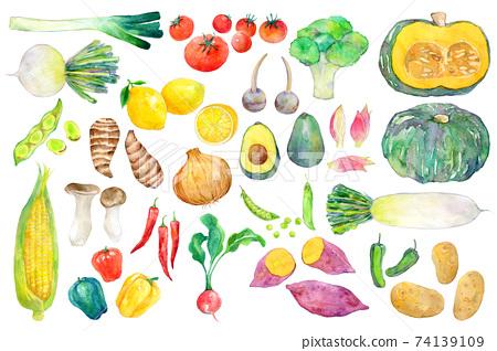 水彩插圖綠色和黃色的蔬菜 74139109