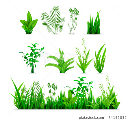Realistic spring grass set collection 74155053
