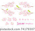 Illustration parts material set of cherry blossoms Branch where white-eye is stopped 74179307