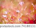 히메후우로과 밝은 빨강 핑크 노랑 검정 계 백 74180131