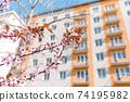Red cherry blossom, blue sky, spring concept 74195982