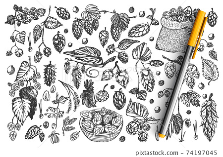 Pine cones doodle set collection 74197045