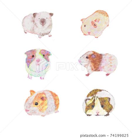 6種手繪豚鼠 74199825