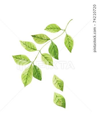 黃色綠色樹枝水彩 74210720