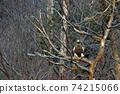 겨울새의 왕자의 풍격 물수리 74215066