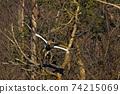 겨울새의 왕자의 풍격 물수리 74215069