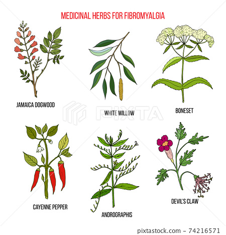 Best herbal remedies for fibromyalgia 74216571