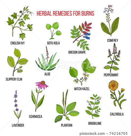 Collection of herbs for burns 74216705