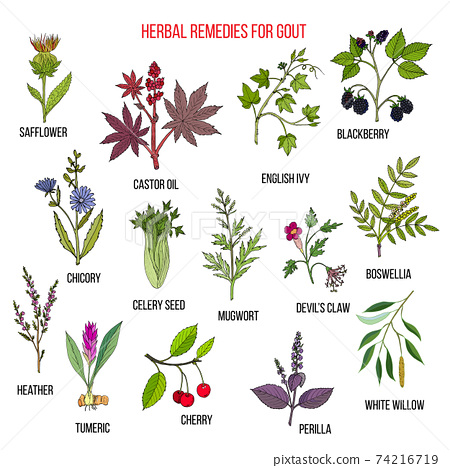 Collection of natural herbs for gout 74216719