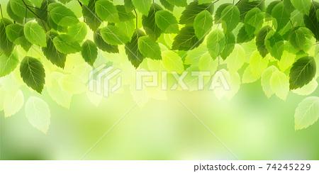신록 잎 봄 배경 74245229