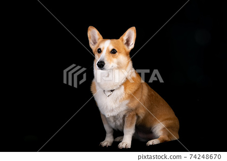 可愛的狗工作室紀念照 74248670
