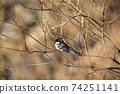 八當壩,鳥類,鳥類,鴨,喜Mag,天洞鴨 74251141