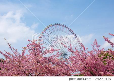 河津櫻花和摩天輪 74271415