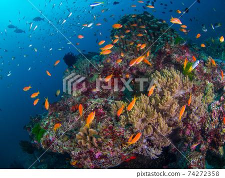 海戈爾迪和珊瑚根(泰國王國斯米蘭群島) 74272358
