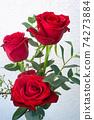 在沖繩開花的紅玫瑰在沖繩亞熱帶的美麗的花朵 74273884