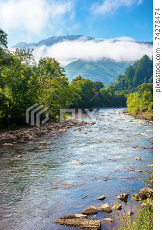 mountain river landscape in summer. wonderful nature scenery on foggy morning. clouds rolling over the distant hill. trees along the stream in the valley. sunny weather with blue sky 74278474
