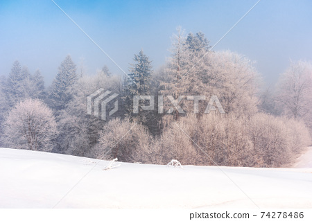 trees in mist on a snow covered hill. fairy tale winter mountain scenery. frosty weather on a sunny morning 74278486