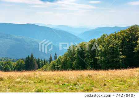 yellow grass on the meadow in mountains. beautiful nature landscape beneath a blue sky with fluffy clouds at high noon. 74278487