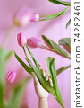 bouquet of tulips on pastel background 74282461