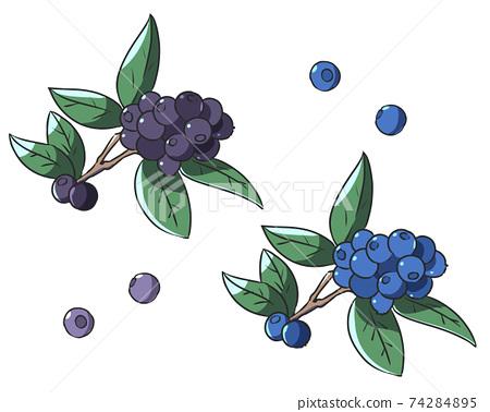 藍莓 74284895