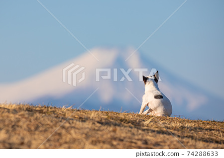 看著富士山的狗的後視圖 74288633
