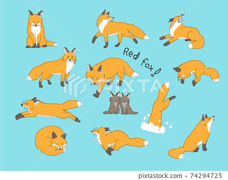 赤狐的各種姿勢 74294725