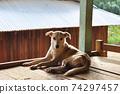 狗的全身 74297457
