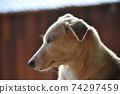混合DOG配置文件 74297459