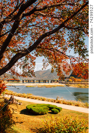 Miryang riverside park and autumn maple in Miryang, Korea 74299527