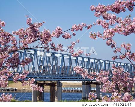 第二江戶川大橋和川津櫻 74302144
