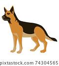 站在遠方的德國牧羊犬 74304565