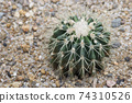 the display a variety of colors and sizes of cactus. 74310526
