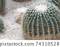 the display a variety of colors and sizes of cactus. 74310528