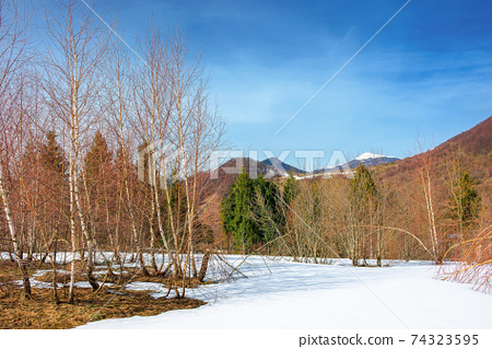 trees on the snow covered meadow in mountains. beautiful winter scenery of uzhanian natural park, ukraine on a sunny day 74323595