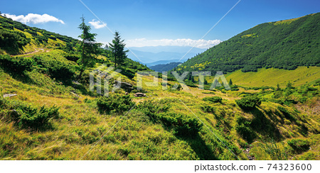 mountain landscape on a summer day. trees on the grassy hill. scenery rolling down the valley in to the distant view. blue sky with fluffy clouds above the black ridge. wonderful adventures in 74323600