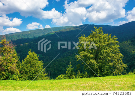 mountainous rural landscape in summertime. trees on the hillside meadow. clouds on the blue sky above the distant ridge. countryside adventures on a sunny day 74323602