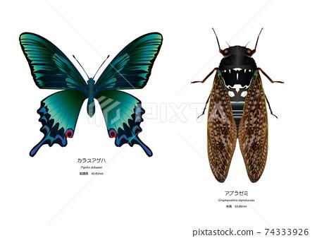 中國孔雀蝴蝶和褐蟬 74333926