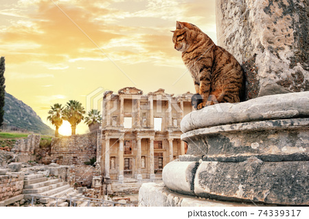 The cat sits near column in background of library of Celsus in Ephesus 74339317