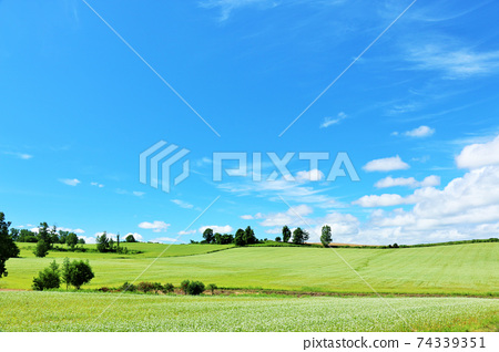 北海道美瑛蕎麥領域在藍藍的天空 74339351
