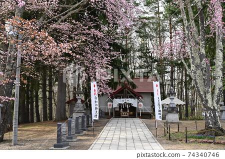 Sakura at Kotohira Shrine in Kitami City, Hokkaido 74340746