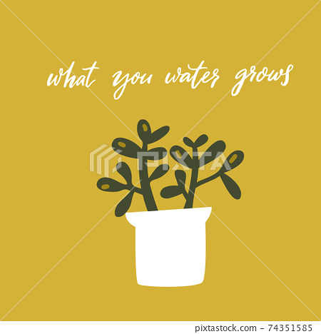 What you water grows. Inspirational quote, handwritten wisdom. Hand drawn doodle illustration of crassula plant in pot on green background. Motivational card vector design. 74351585