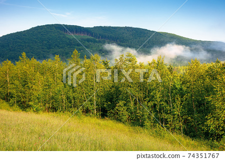 grassy meadow in mountains. fog rolling through the valley above the distant forest. beautiful rural landscape on the summer morning. sunny weather with blue sky 74351767