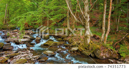 mountain river runs through the forest. water flow among the rocks. trees in fresh green foliage. beautiful nature scenery in spring 74351773