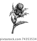 Vector illustration of a thistle flower. Hand drawn vector illustration on white background. Engraving drawing style. 74353534