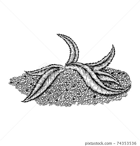 Superfood hemp protein. Leaf and seeds. Hand drawn vector illustration on white background. Engraving drawing style. 74353536