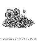 Hand drawn flax flowers and seeds. Hand drawn sketches vector illustration on white background in vintage style. 74353538